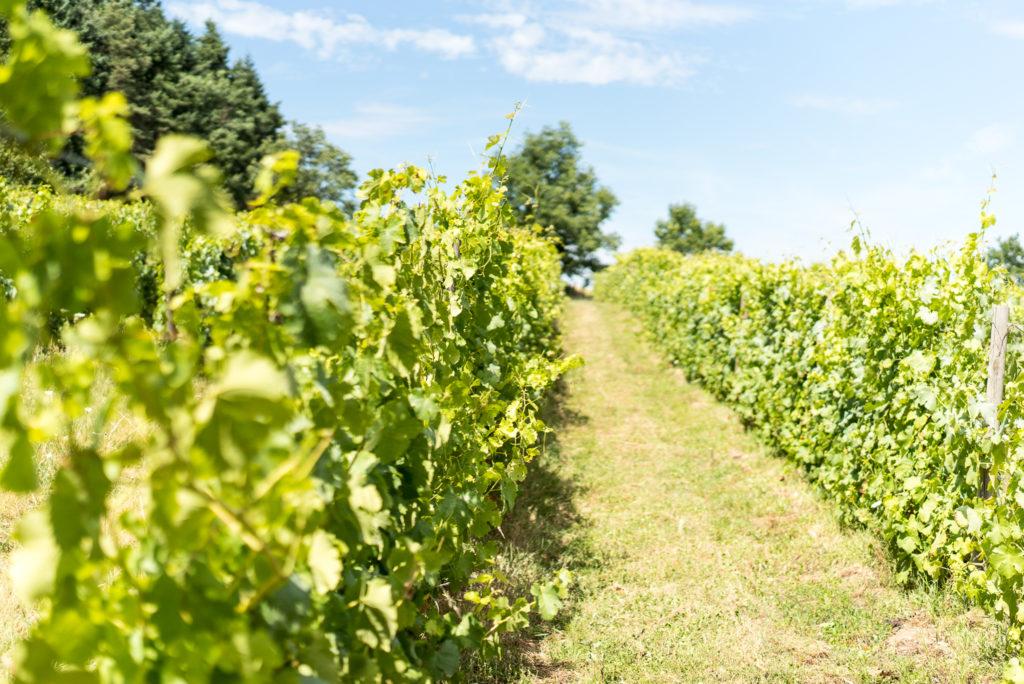 A la Martinière vous pourrez trouver du Côte Roannais biologique, qu'il soit blanc, rosé ou rouge.